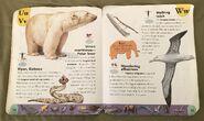 Extreme Animals Dictionary (24)