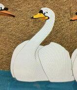Mute Swan)