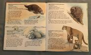 My First Book of Animals from A to Z (21)