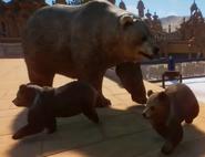 Planet Zoo Himalayan Brown Bear