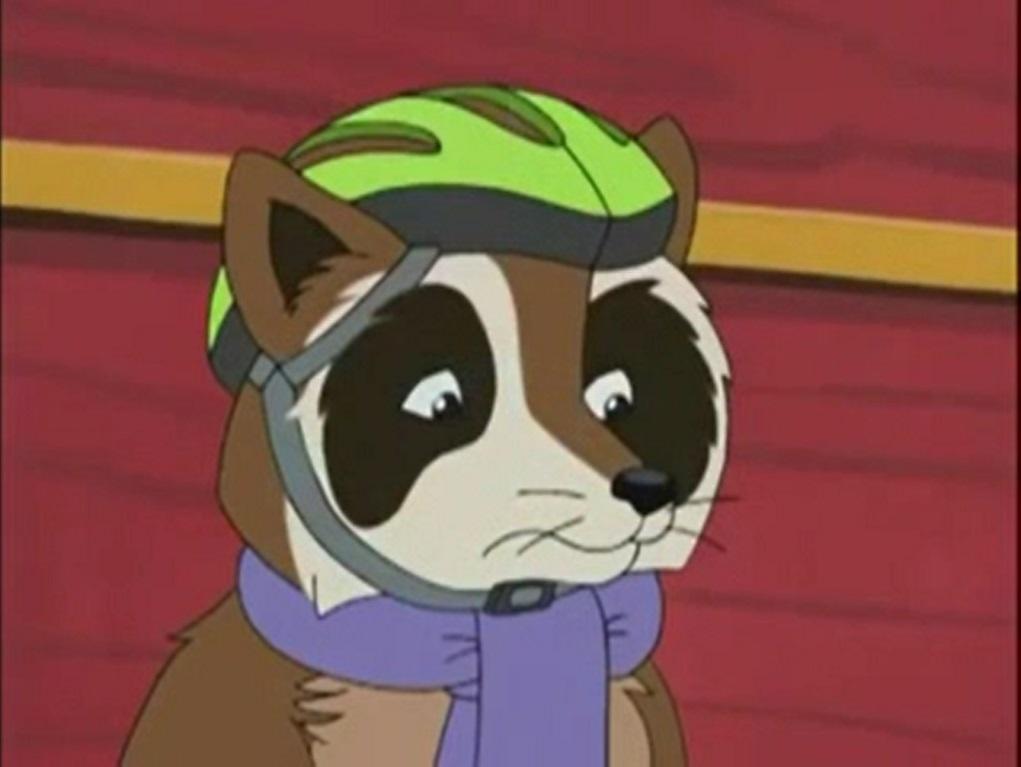 Raccoon (Franklin)