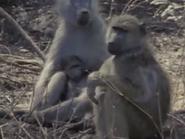 Amazing-animals-activity-center-baboon