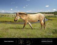Horse, Hagerman