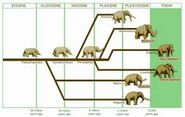 Mammoths Mastodons Elephants Hyraxes Manatees Aardvarks Hippos Rhinos and Whales