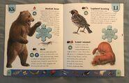 Polar Animals Dictionary (13)