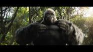 TOAOI Gorilla