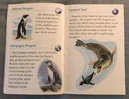 Animals of the Polar Regions (4)