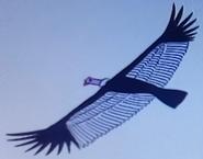Batw-animal encyclopedia-andean-condor