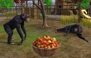 Chimpanzee-wildlife-park-2