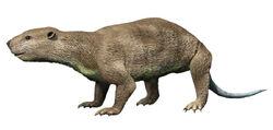 Didelphodon NT small.jpg