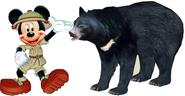 MM Asiatic Black Bear