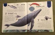 Ocean Life Dictionary (10)