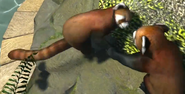 Red-panda-zootycoon3