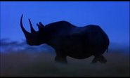 Rhinoceros, Black (Mama Mirabelle's Home Movies)