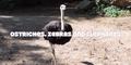 Riverbanks Zoo Ostrich