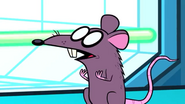 TTG Rat