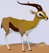 Thomson's Gazelle WOZ