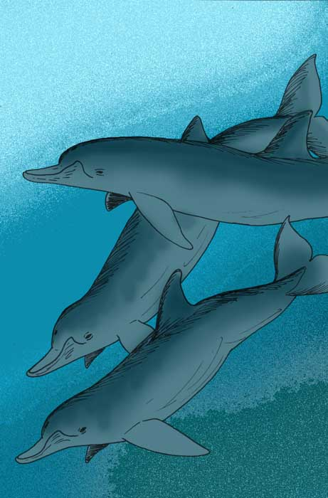 Australodelphis