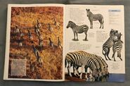 DK Encyclopedia Of Animals (171)