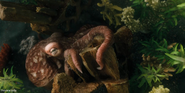 Dolittle Octopus