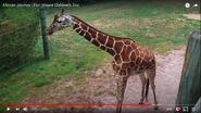 Fort Wayne Children's Zoo Giraffe