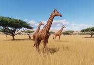 Reticulated-giraffe-planet-zoo