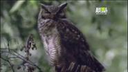 UTAUC Owl