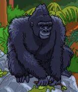 BTKB Gorilla
