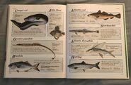 Macmillan Animal Encyclopedia for Children (43)