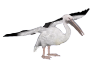 PelicanWhite HENDRIX
