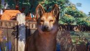 Planet Zoo Dingo