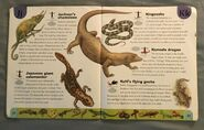 Reptiles and Amphibians Dictionary (13)