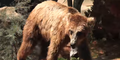 Riverbanks Zoo Grizzly