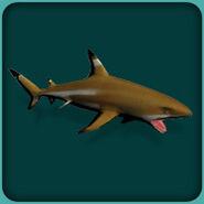 Blacktip Reef Shark (Blue Fang)
