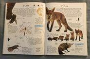 DK Encyclopedia Of Animals (79)