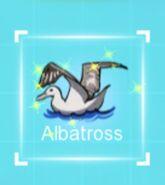 IMG dc albatross