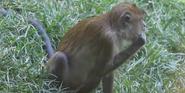 Indianapolis Zoo Macaque