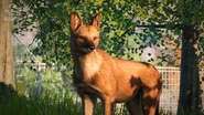 Planet Zoo Dhole