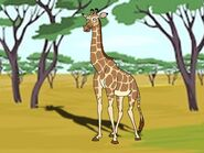 Rileys Adventures Angolan Giraffe