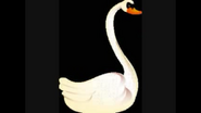 Safari Island Swan