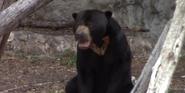 San Antonio Zoo Sun Bear