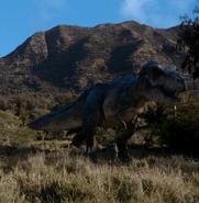 Tyrannosaurus Doe (V2)