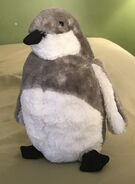 Zoe the Black-Footed Penguin Chick