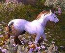 300px-Unicorn Legion