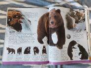 Animal (DK Online) (125)