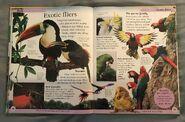 DK First Animal Encyclopedia (34)