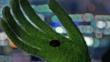 MMW mole