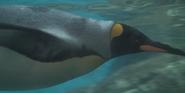 Riverbanks Zoo King penguin