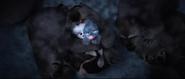 Bilby Wombats