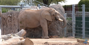 Reid Park Zoo Elephant